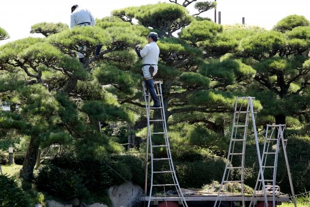 植木職人の仕事内容